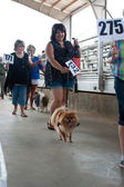 Contestants Parade Their Dogs For Judging At Dog Festival — Stock Photo