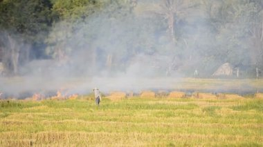 Fire burning rice straw in countryside field — Vídeo de stock