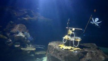 Big aquarium simulations undersea and shark swimming in side — Stock Video