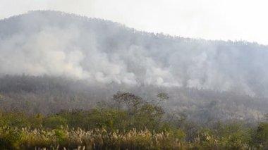 Požár v Thajsku hora — Stock video