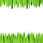 Zielone tło, rama realistyczny zioła — Wektor stockowy