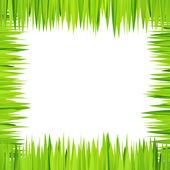 Fundo verde, quadro com ervas realistas — Vetor de Stock
