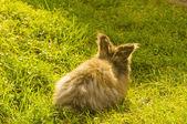 緑の芝生の装飾的なウサギ — ストック写真