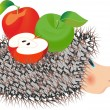 Royalty-Free Stock Vector Image: Hedgehog with apple