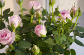 Rose with green leaves on a colorful background — Foto de Stock