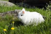 Fluffy rabbit — Stock Photo