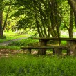 Stock Photo: Table in wilderness