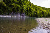 Beautiful river with green trees — Stock fotografie