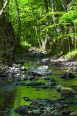 The mountain river. — Stock Photo