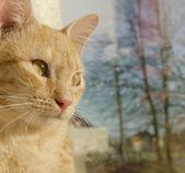 Beautiful redhead kitten. — Stockfoto