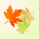 Autumn maple leaves. Vector illustration — Stock Vector