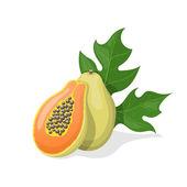 Papaya on white background. Vector illustration — Stock Vector