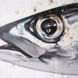 FISH HEAD GRAFFITI -  