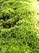 Moss on tree — Stock Photo