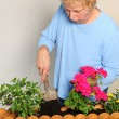 Planting flower box — Stock Photo #12114104