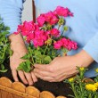 Planting flower box — Stock Photo #12114107