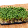 Cress — Stock Photo #12189102