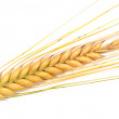 Barley in front of a white background — Stock Photo #13138835