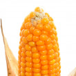 Corn — Stock Photo #13609082