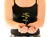 Tender seedling — Stock Photo