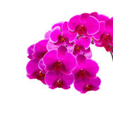 Beautiful pink orchid isolated on a white background — Stock Photo