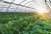 Greenhouse — Stock Photo