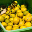 Stock Photo: Freshly picked lemons