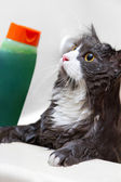 Cat in the shower — Stock Photo