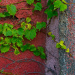 Stock Photo: Walls corner and Green leaves of plants