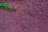 Background texture green leaves on the surface of the wall — Stock fotografie
