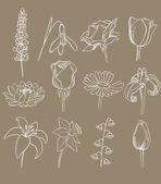Coleção de vetores de muitas flores diferentes — Vetorial Stock