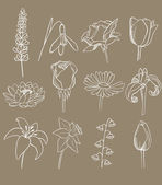 Many different flowers vector collection — Vetorial Stock