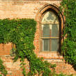 Royalty-Free Stock Photo: Gothic window and ivy