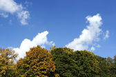 Closeup of autumn trees with yellow leaves and blue cloudy sky — Stock Photo