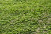 Texture of natural green grass and ground — Stock Photo