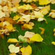 Many yellow withered leaves on green lawn — Stock Photo