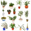 Many different houseplants in pots, isolated - Stock Photo