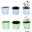 Stock Photo: Many bright flowerpots with ground and Kalanchoe plants from dif