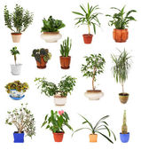 Many different houseplants in pots, isolated — Stock Photo