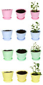 Many bright flowerpots with ground and Kalanchoe plants from dif — Stock Photo