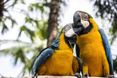 The parrots — Stock Photo
