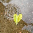 Stock Photo: Leave Heart and Rain Drop