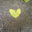 Stock Photo: Heart Shaped Tree Leaves
