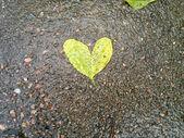 Heart Shaped Tree Leaves — Stock Photo