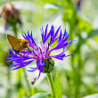 Stock Photo: Butterfly and flower