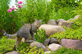 The cat hunts on stones — Stock Photo