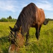 The horse on a golden meadow — Stock Photo #12205282