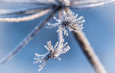 Ice crystals on the flower — Stock Photo