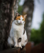 Cat sitting on a fence — Stock Photo