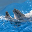 Dolphins in the water park — Stock Photo